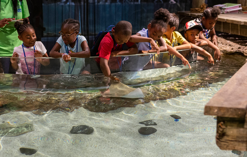 Children can touch small rays at the Hands-On Harbor exhibit at the Greensboro Science Center.